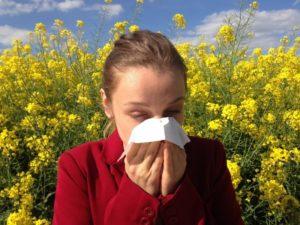 Propolis para las alergias