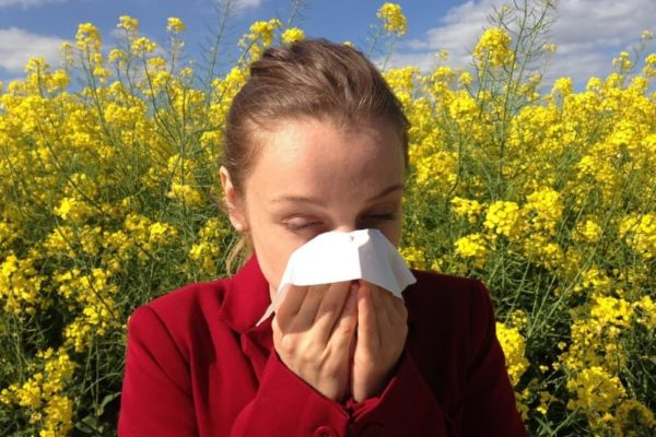 Propóleo para las alergias. Efectos y beneficios.