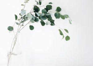 Propiedades para la salud del eucalipto