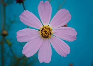 Usos y beneficios del polen