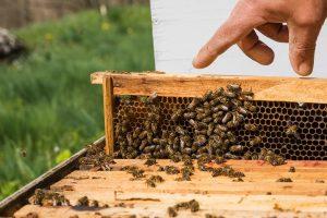 propolis verde abejas Brasil